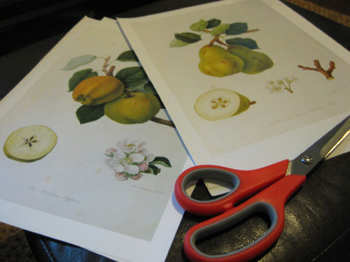 botanicals-from-hooker-book-cut-outs-project