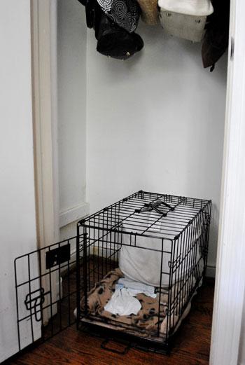 Building An Extra Closet Shelf To Integrate A Dog Crate