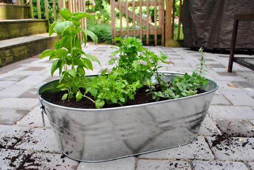 Making an herb garden in a metal tub young house love for Patio herb garden designs containers
