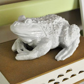 Spraying An Ugly Frog White