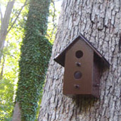 Sprucing Up A Birdhouse