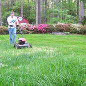 Growing A Lush Lawn