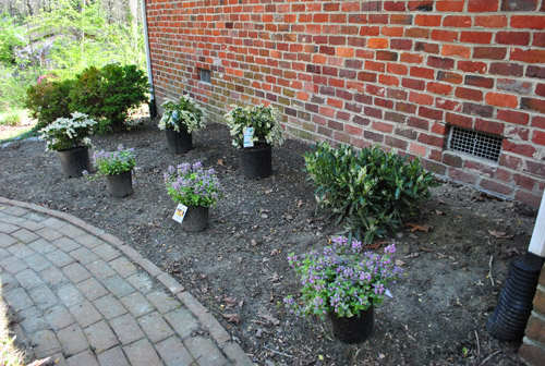Landscaping Shrubs Around House : Why did we get three of each type well lots landscaping experts