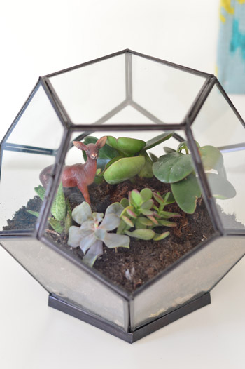 Perfect Making A Tabletop Terrarium