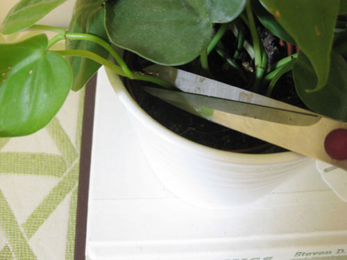 how-to-make-plant-cuttings