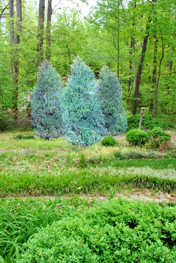 Planting A Few Leyland Cypress Trees For Added Privacy Young House Love
