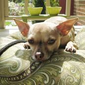 Creating A Porch Dog Spot