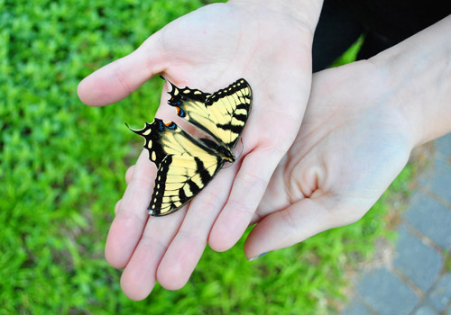 Adding To Our Butterfly Collection | Young House Love