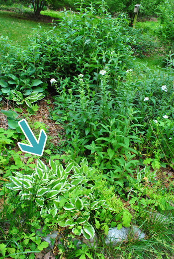 38+ Front Yard Hosta Garden Ideas
