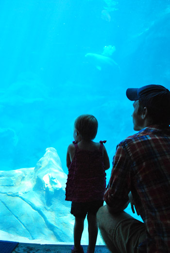 georgia aquarium with a toddler beluga tank