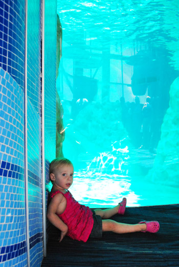 georgia aquarium toddler resting by dolphin tank
