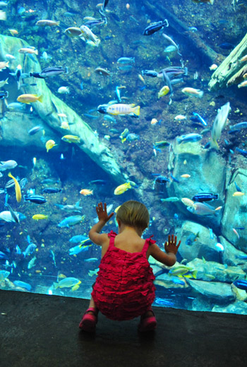 georgia aquarium fish tank with toddler