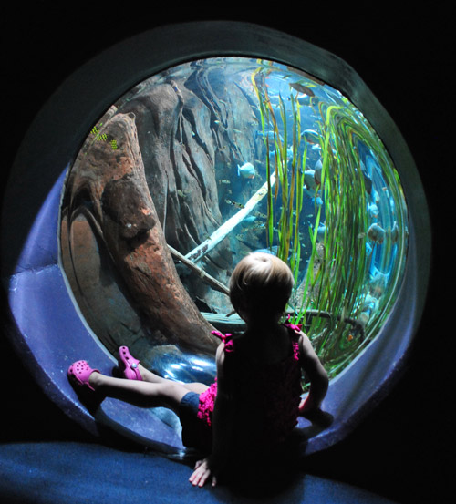 georgia aquarium toddler viewing fish