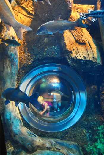 georgia aquarium fish eye porthole