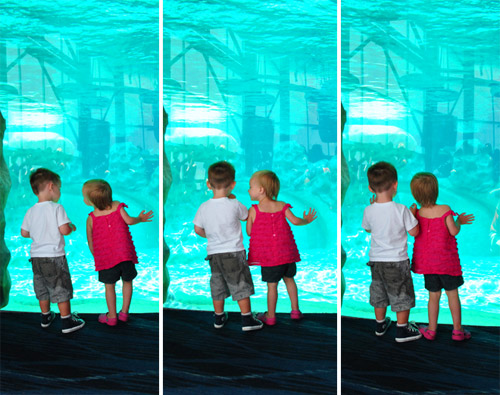 georgia aquarium toddlers at dolphin tank