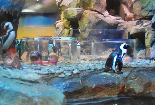 georgia aquarium penguin viewing