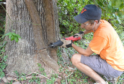Cutting Back And Removing An Overgrown Vine From A Tree